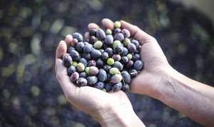 hands_olives